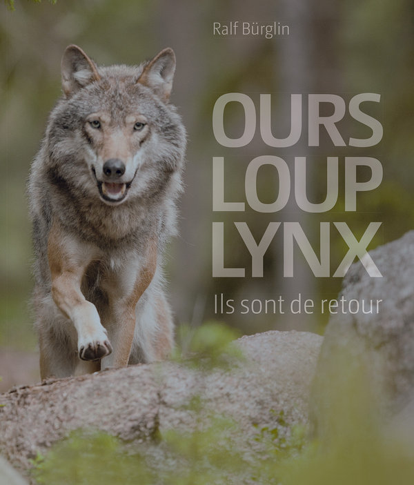 Ours loup lynx